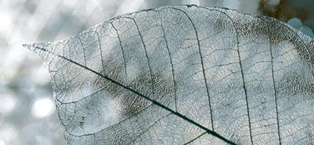 MAGIA серый Декор 23x50 Д61071-1