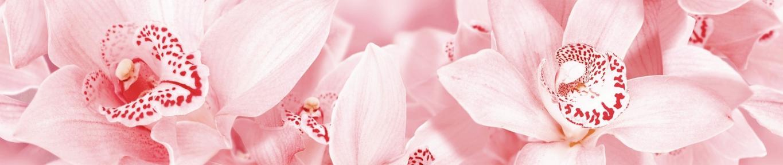 Розовый Бордюр Aroma 7,5x45 1504-0126