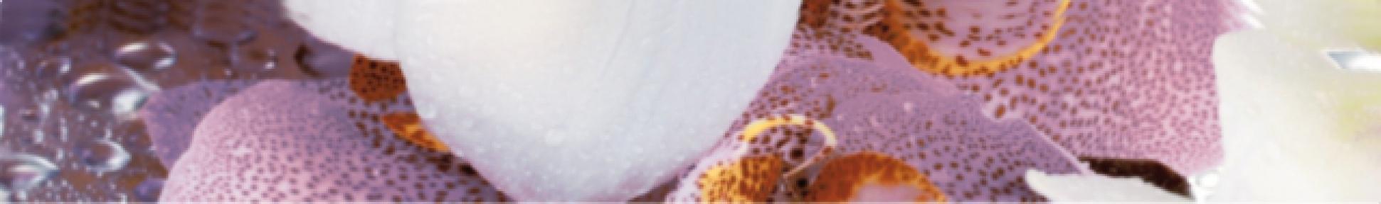 ALBA Orchid Бордюр 4,5*30 AL-B-ORC